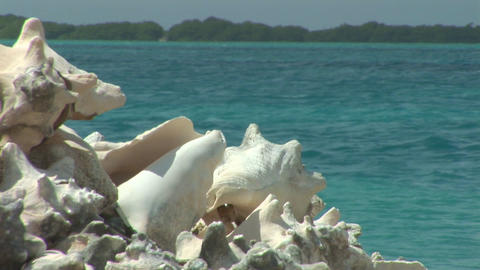 Heap of empty shells Stock Video Footage