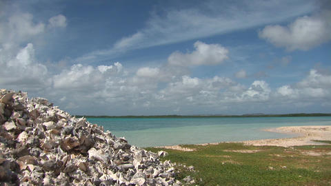 Heap of empty shells with bay Stock Video Footage