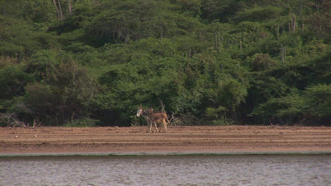 Two donkeys Stock Video Footage