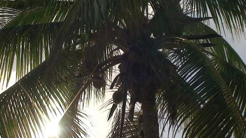 Trinidad Playa Ancón beachview palmtree Stock Video Footage