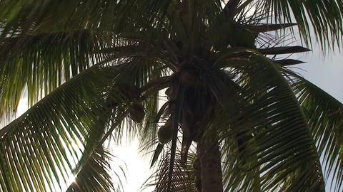 Trinidad Playa Ancón beachview palmtree Footage
