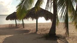 Trinidad Playa Ancón beachview palmtree and paras Stock Video Footage