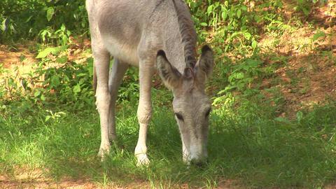 Donkey Footage