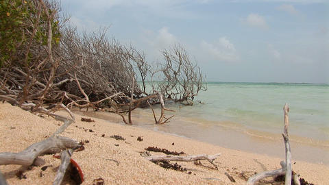 Mangrove and beach Stock Video Footage