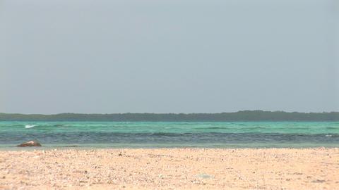 Ocean And Mangrove stock footage