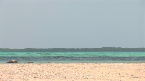 Ocean and mangrove Stock Video Footage