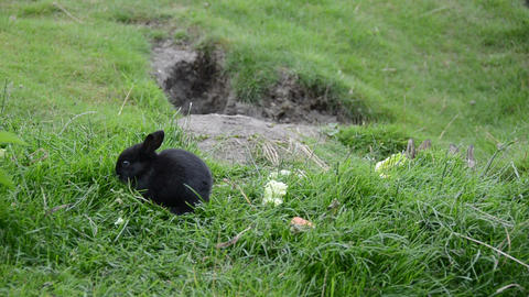 Cute rabbits sitting on grass and eating Stock Video Footage