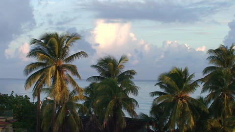 Cuba Sunrise and palmtrees Stock Video Footage