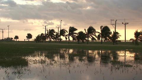 Cuba Sunrise at a pond 2 Stock Video Footage