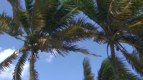 Varadero Palmtrees at blue sky Stock Video Footage