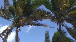 Varadero Palmtrees at blue sky Stock Video Footage