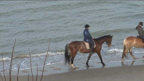 Horse riding at the coast of the Netherlands Stock Video Footage