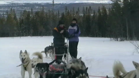 Norway, sled dogs ride Stock Video Footage