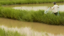 Asian Man Casting Fishing Net into a Pond Stock Video Footage