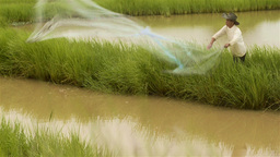 Asian Man Casting Fishing Net Into A Pond stock footage
