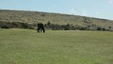 Free Range Horse stock footage