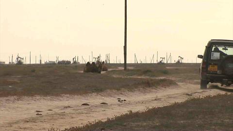 Car on Steppe Camels Oil Kazakhstan Stock Video Footage