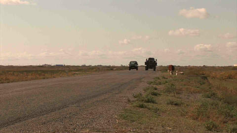 Car Roadside Cow Tractor Kazakhstan Stock Video Footage