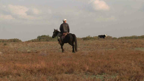 Man Riding Horse Kazakhstan Stock Video Footage