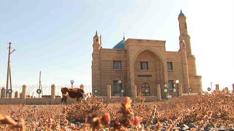 Mosque Cow Kazakhstan Stock Video Footage
