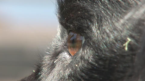 Dog's eye Stock Video Footage