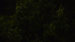 Tree at a thunderstorm at night Stock Video Footage