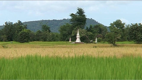 Rice field with small offer temple Stock Video Footage