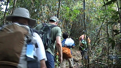 Vieng Phoukha, hiking with group tourists Stock Video Footage