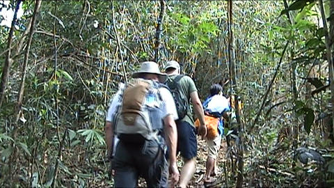 Vieng Phoukha, hiking with group tourists Footage