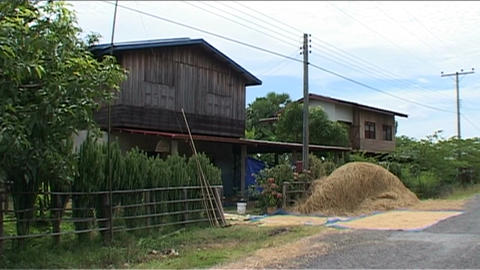 House and rice Stock Video Footage