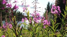 Summer Flowers Stock Video Footage
