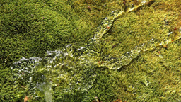 Water and Moss Stock Video Footage