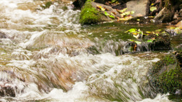 flow of water in the forest creek Footage
