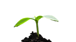 The growth of young green plants Stock Video Footage