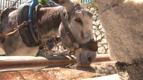 Donkey drinking Stock Video Footage
