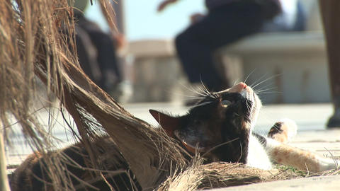 Stray cat wakes up Stock Video Footage
