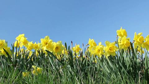 Springtime Flowers Footage