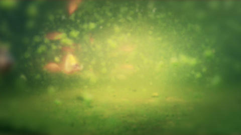 Pond Fish 01 Stock Video Footage