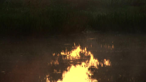 Misty Swamp stock footage
