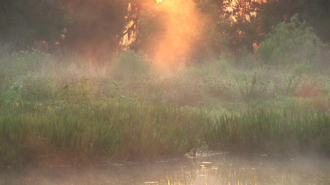Misty swamp Stock Video Footage