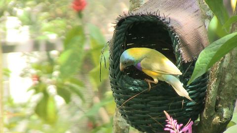 Bird birdhouse flies away Stock Video Footage