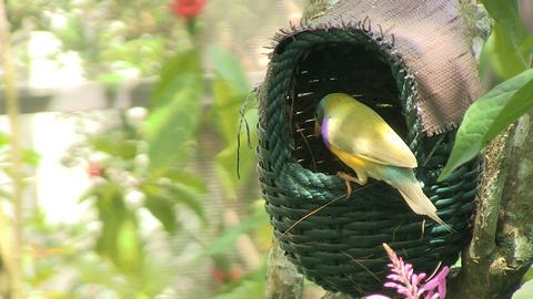 Bird birdhouse flies away Live Action