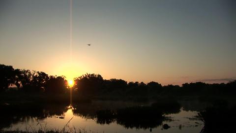 Swamp sunrise Stock Video Footage