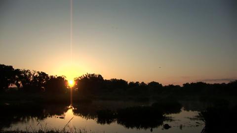 Swamp sunrise Footage