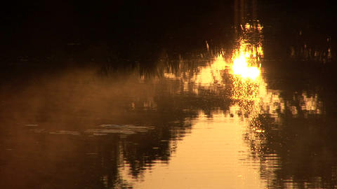 Swamp early morning Stock Video Footage