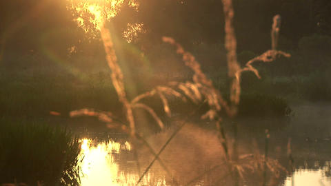 Early morning at swamp Stock Video Footage