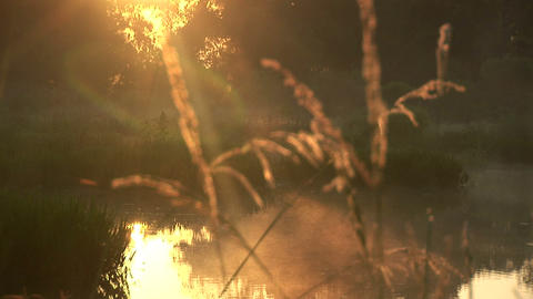 Early Morning At Swamp stock footage