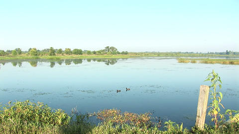 Swamp in Florida Footage