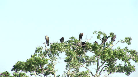 Birds in tree Stock Video Footage