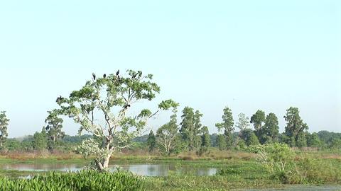 Birds in tree Stock Video Footage
